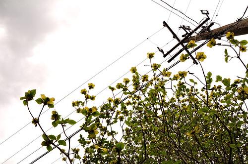 Dogwood Wire Up