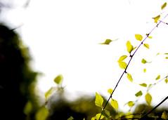 Springtime reverie (.I Travel East.) Tags: life green love leaves leaf spring nikon friend louisiana baker live east ami nikkor freund lucio springtime amie 2011 kaibigan bakerlouisiana batonrougezoo itravel d700 nikond700 itraveleast gedelacruzphotography