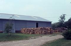 Lapeer 1982 woodpile in backyard. (crossloch) Tags: wood barn 1982 oak cords michigan woodstove lapeer oregonrd