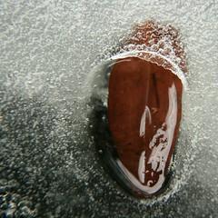 365 days | 079 | thawtongue (Der Ohlsen) Tags: colour water closeup digital square leaf wasser ive tau blatt eis thew 500x500 project365 365days canoneos400d unintendedjewelry