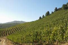 Apalta Vineyards - Via Montes (Jomar Brustolin) Tags: wine vineyards vinho vinhedo vinicolas qvinho qvotr2009
