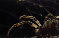 spiderman in DD