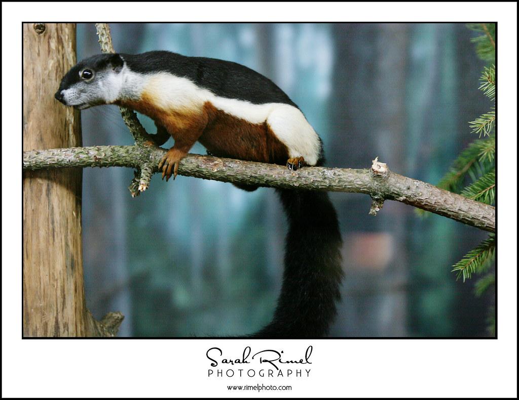 feb zoo 22