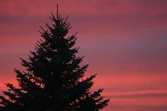 Night Pine on Sunset (bigbrowneyez) Tags: street pink blue sunset sky sun house black love nature pine night purple orang