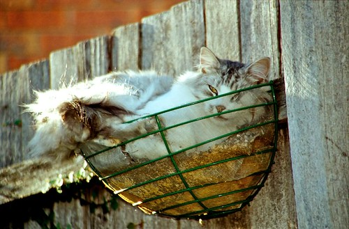 cat sitting in the basket