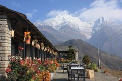 Gurung cottage (pandemonium pasha) Tags: nepal annapurna ghandruk annapurnasouth hiunchuli sooc meronepal gurungcottage