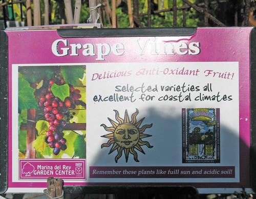 grape vine sign