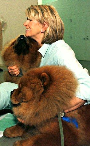 martha's dogs