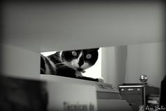 Espartaco (.Ana Bello.) Tags: madrid blancoynegro ana stage ojos gato mirada castellana bello espartaco prcticas anabello dolchelecro pablolecroisey