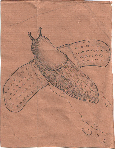 Slug on a Bandaid by Alicia Carrier