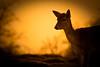 Deer in Knole Park (ickle_martyn) Tags: nature outdoors kent wildlife deer sevenoaks knole knolepark march09 sonya300 mwqio