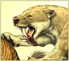 Dinosaur Prehistoric Mammal Sabretooth Cat (griffinlb) Tags: mammal dinosaur paleontology prehistoric extinct