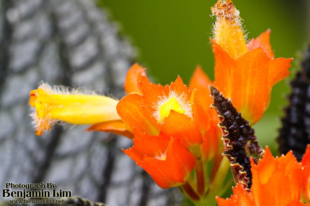 butterflyfarm_flower07