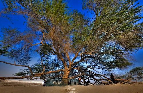 Tree of Life - Bahrain (HDR)