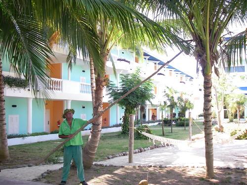 Un gradinar da jos dintr-un cocotier o nuca de cocos