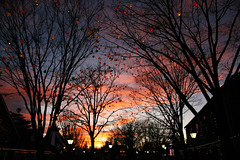Hershey Park @ sunset (anita gt) Tags: park trees sunset usa atardecer arboles pennsylvania silhouettes hershey 1785mm siluetas eeuu