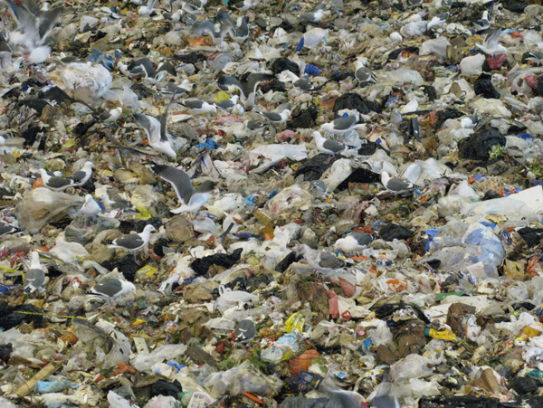 San Francisco, Waste, And Environmental Discrimination At Hunters Point