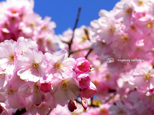 Ricoh_CX1_Sample_50 (by euyoung)