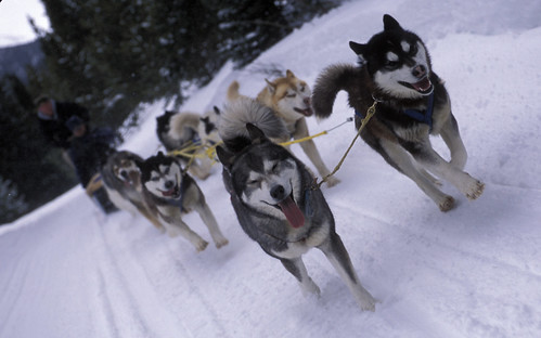 Dog sledding in Baqueira Beret