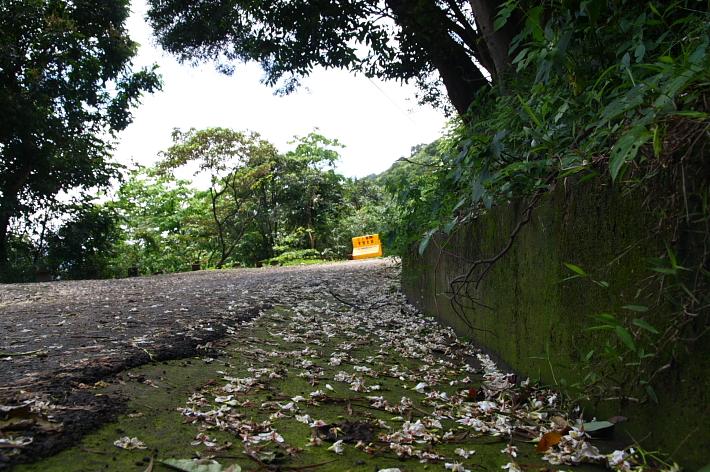三峽賞桐鳶山步道、銅鐘11