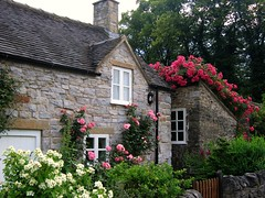 Cottage with Roses in the Village of Thorpe on the Tissington Trail in Derbyshire (UGArdener) Tags: pink roses summer england white english gardens cycling unitedkingdom britain derbyshire cottage july summertime englishgardens tissington cottagegardens englishtravel