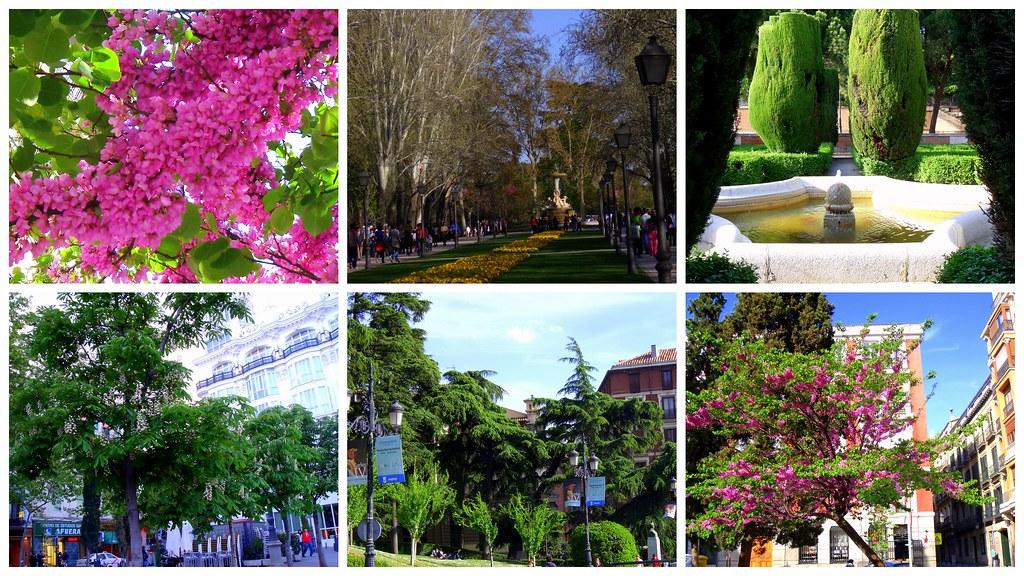 Parques y jardines