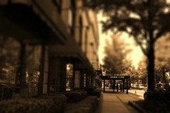 Yamashita Park Avenue (chihilo) Tags: road street light shadow sky plant building tree window japan sepia canon hotel ombre ciel lumiere  yokohama noon midi  avenue   arbre  japon           tiltshift           yamashitaparkavenue