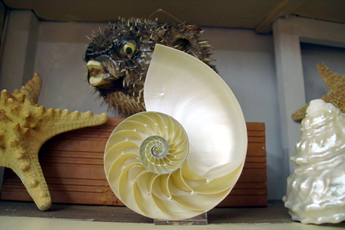 shell-valencia