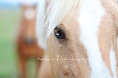 IMG_7762 (Bethany F Photography) Tags: horses blackandwhite woman whimsy profile quarterhorse