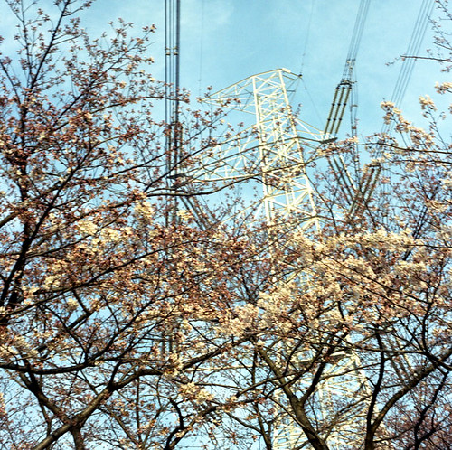 Power Dominates Blossoms
