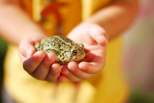 poor little froggy...