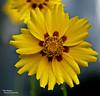 Flower Zen