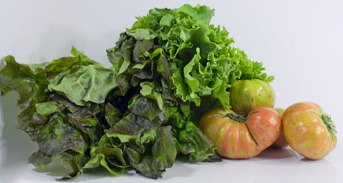 tomatoes lettuce