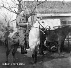010a dad on horse (donmaclean) Tags: ww2 eto veterinarycorps