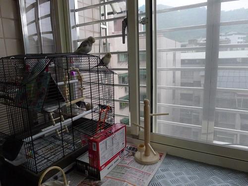 鳥籠放在房間外的小陽台