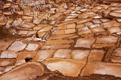 Salinas (chatursunil) Tags: peru salt salinas sacredvalley urubamba pans vallesagrada