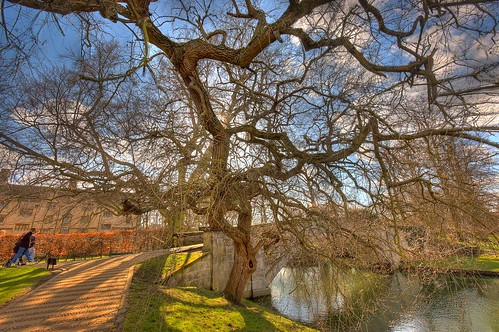 The Tree by King's College Bridge
