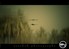 is it mirage !     (ayashok photography) Tags: nikon waves bangalore ps 180degree nikonstunninggallery nikond40 ayashok varthurlake nikor55200mm specialtones titlecourtesyanand