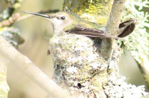 bird_on_nest