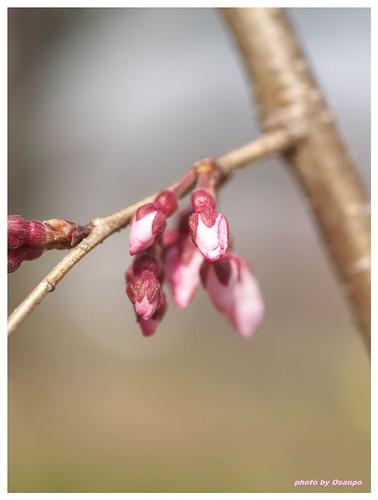 Spring days 090320 #02