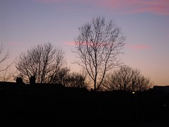 Sunset over Poole (crwilliams) Tags: sunset tree silhouette skyline dorset poole date:month=march date:day=20 date:year=2009 date:wday=friday date:hour=18