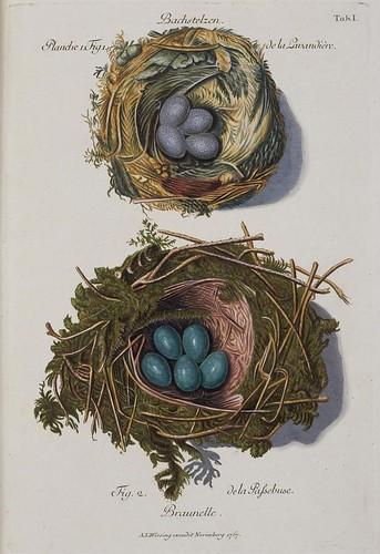 Sammlung von Nestern.. (1772-1786)