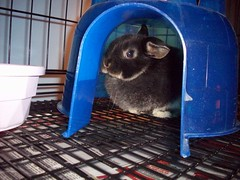 Tanya (firestar_is_cool) Tags: baby bunny babies tanya mini named lop