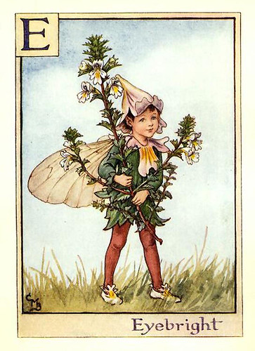 025-eyebright_flower_fairy