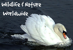 Wildlife & Nature Wordwide