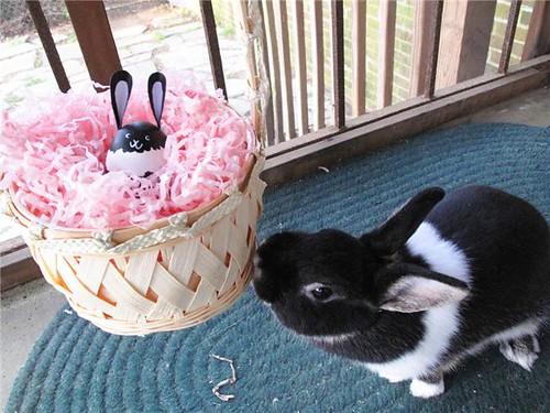 Oreo Easter