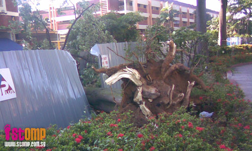 Tree uprooted and crashes into construction site during storm in Changi Village