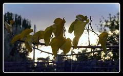 crepuscolo (saro vet) Tags: olympus olympuse410 veterinarifotografi italiarurale rosariomoscato