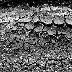 Drre / Drought (digitus_malus) Tags: blackandwhite bw mud dry drought sw nikkor schwarzweiss trocken d300 lehm 50mmf18af nikoncapturenx duerre