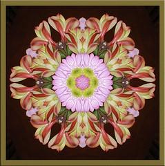 0b (Venus Oak) Tags: flowers kaleidoscope kal